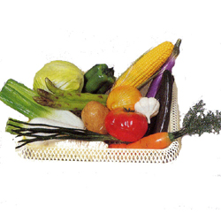 SN 野菜模型 15点組