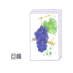 塗り絵 塗り絵物語 枝付の果物編 巨峰 ゆめ画材